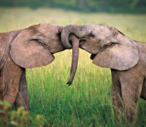 animal_couples_in_love_19