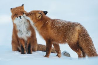animal_couples_in_love_5