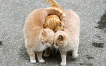 animal_couples_in_love_6