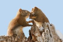 animal_couples_in_love_9