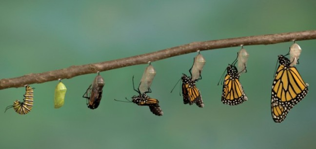 transformation_personal_journey-720x340