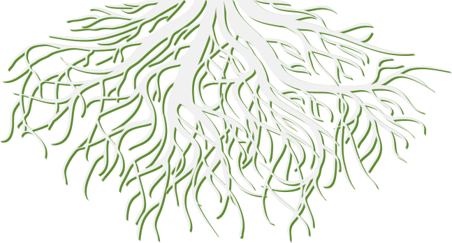 rsp_tree_transparent